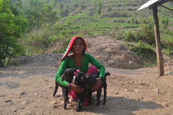 Microfinance for widow Goat farming
